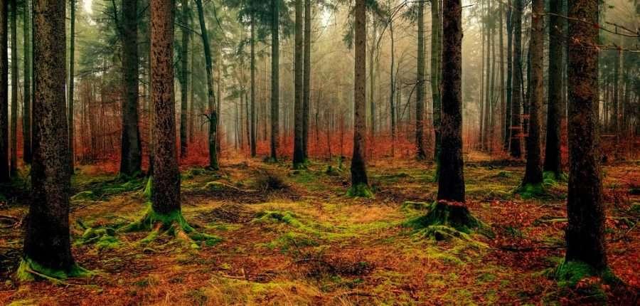 herfstkleuren photoshop